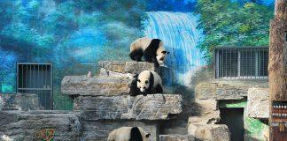 A világ 8 legnagyobb állatkertje