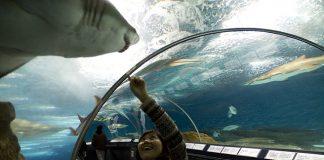 A világ 10 legnagyobb akváriuma