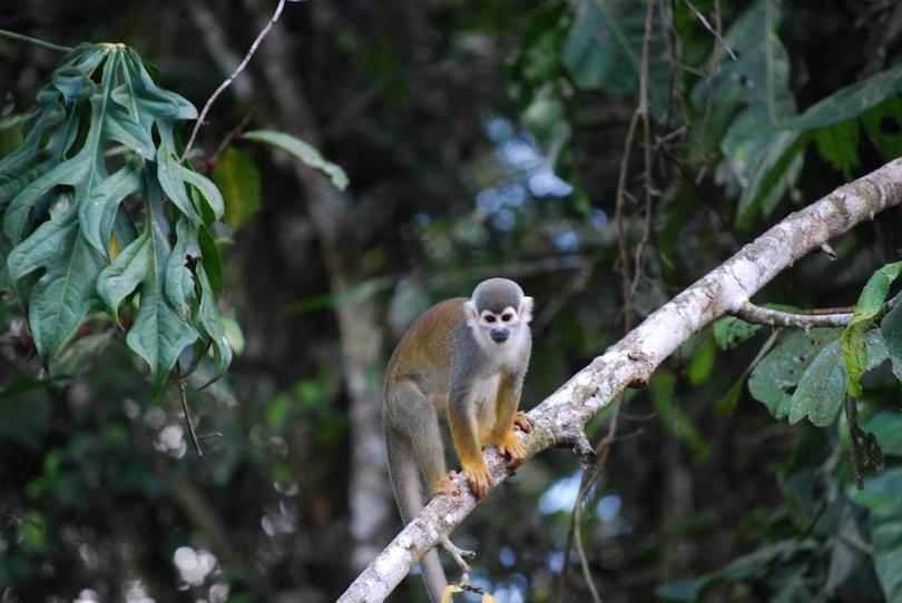Cuyabeno Vadvédelmi Rezervátum