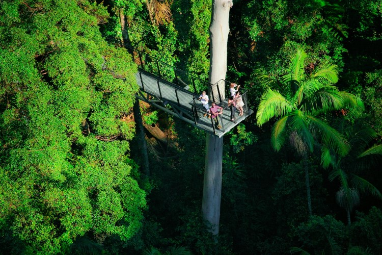 Tamborine Rainforest Skywalk