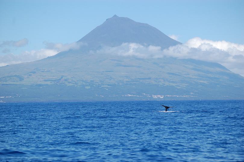 Azori-szigetek