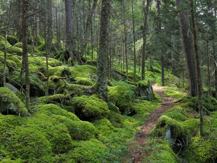 A Nagy Füstös Hegység Nemzeti Park (Great Smoky Mountains National Park)