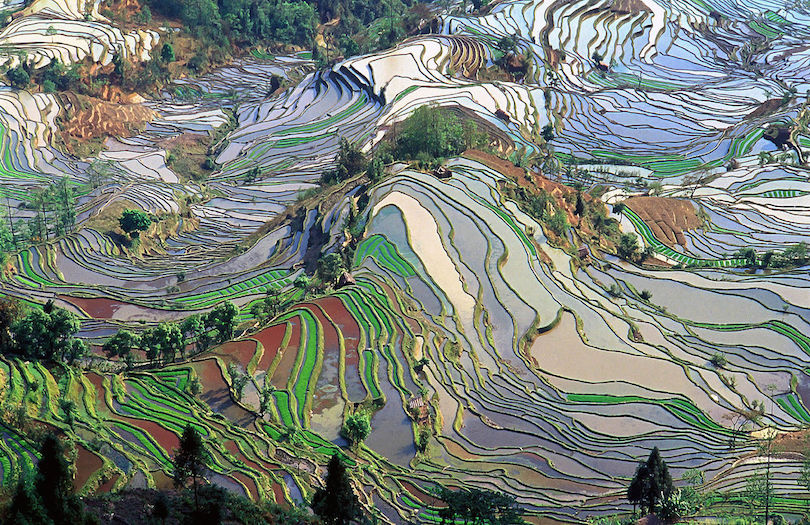 Hani rizsteraszok