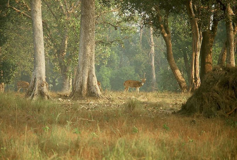 Kanha Nemzeti Park