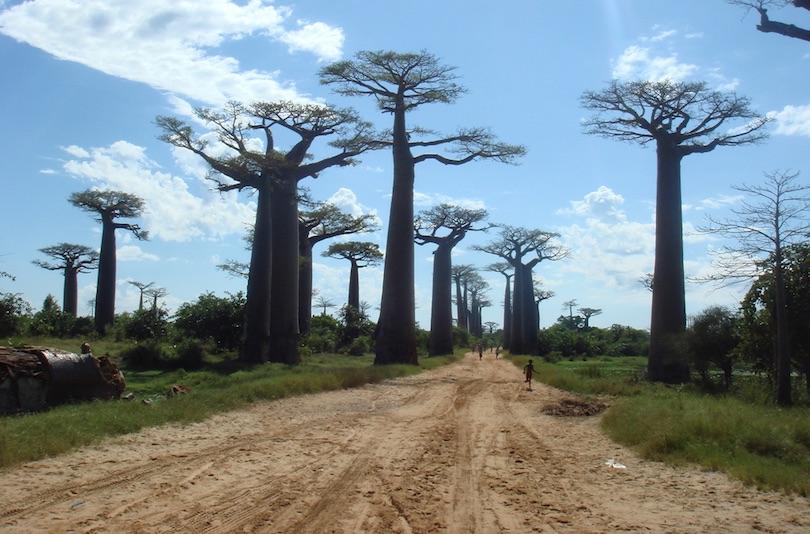 Baobabs Avenue, azaz a Majomkenyérfák útja