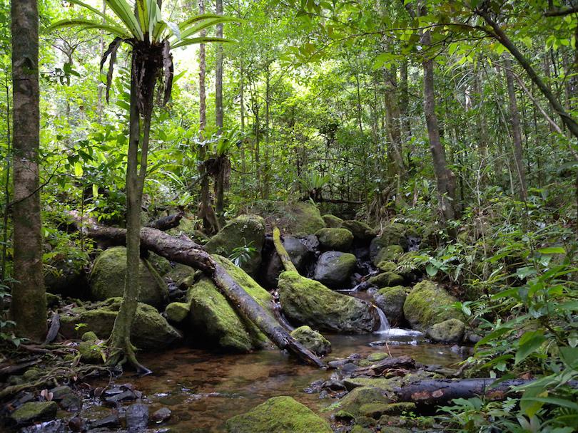 Masoala Nemzeti Park