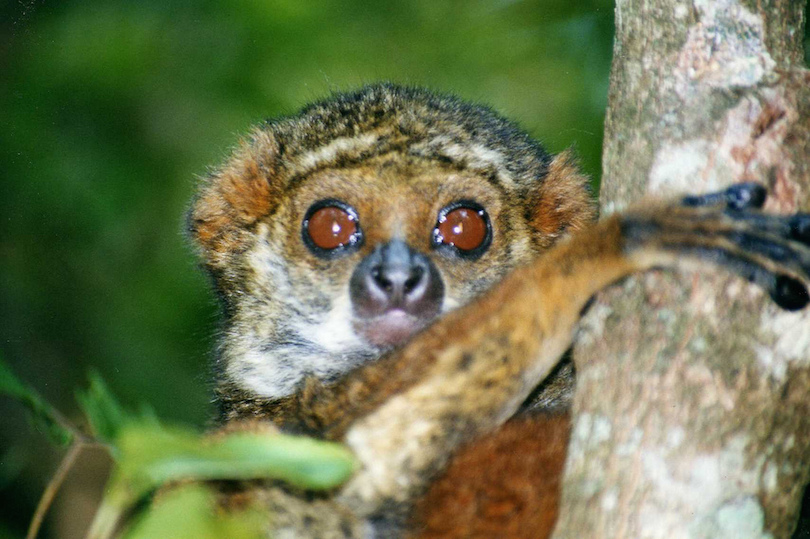 Ranomafana Nemzeti Park