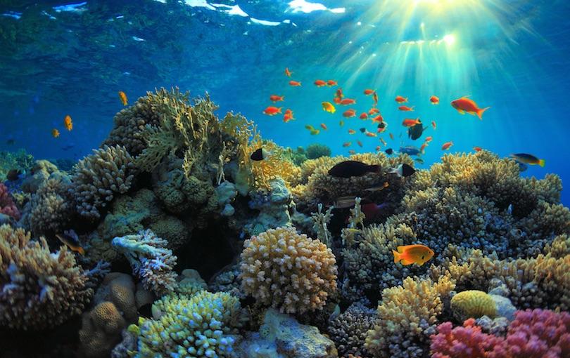 Vörös-tengeri zátonyok