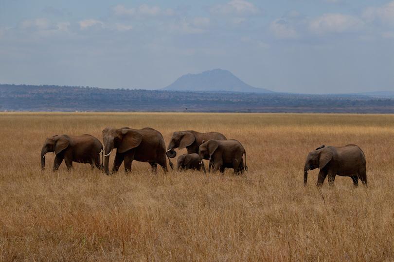 Tarangire Nemzeti Park
