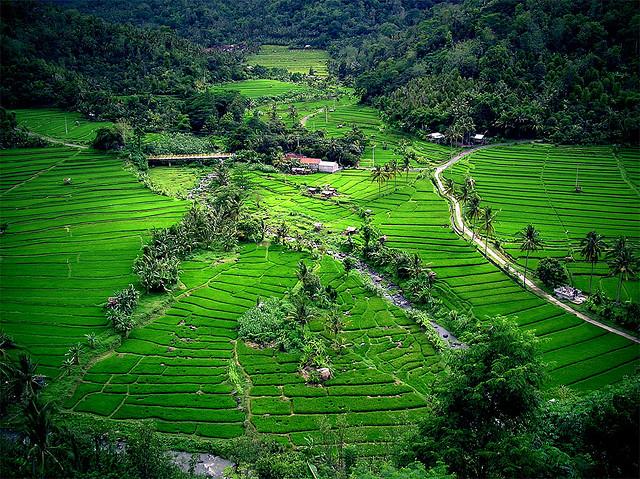 Bali teraszok