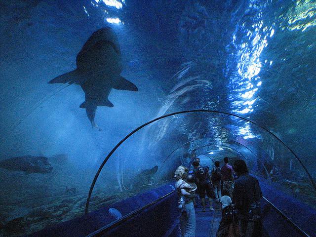 Nyugat-Ausztráliai Akvárium (0,8 millió gallon)