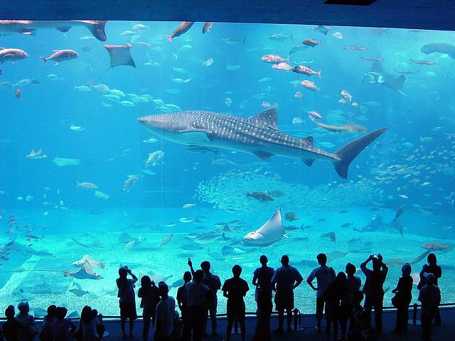 Okinawa Churaumi Akvárium (1,98 millió gallon)