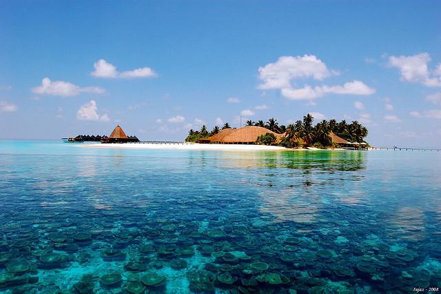 Maldív zátonyok