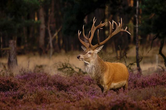 Hoge Veluwe Nemzeti Park