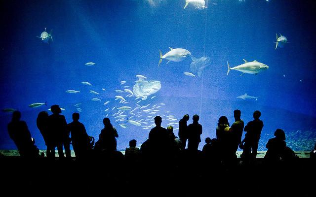 Monterey-öböl Akvárium (1,2 millió gallon)