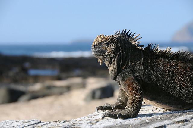 Galapagos-szigetek