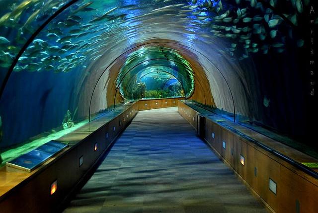 L'Oceanogràfic (1,85 millió gallon)