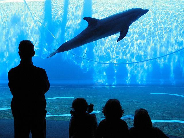 Genovai Akvárium (< 1 millió gallon)