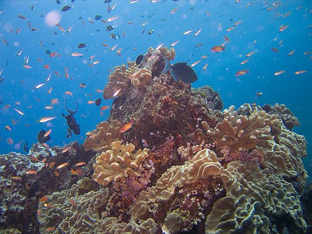 Similan-szigetek
